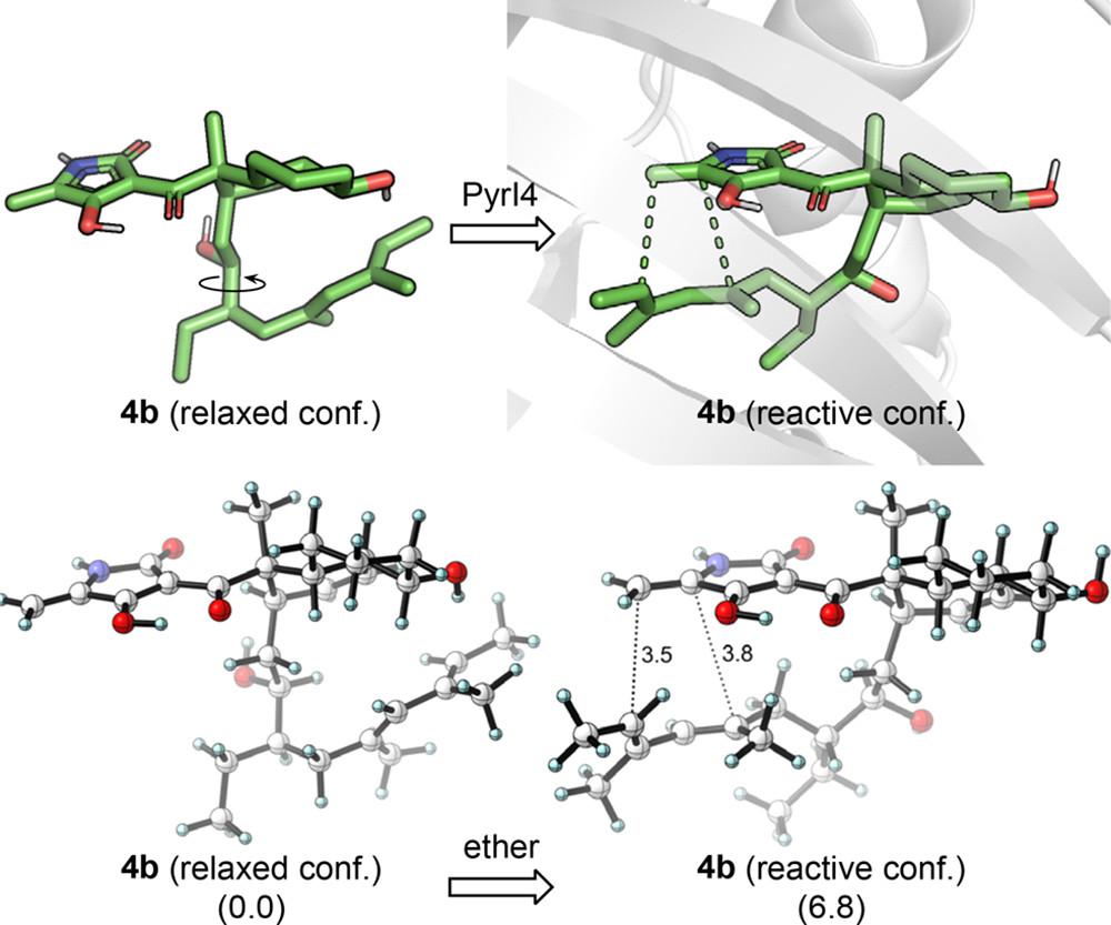 JACS   量子化学计算揭示D-A环加成酶PyrI4的催化机制
